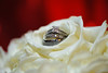 20091003_Robinson_Cole_Wedding_1211
