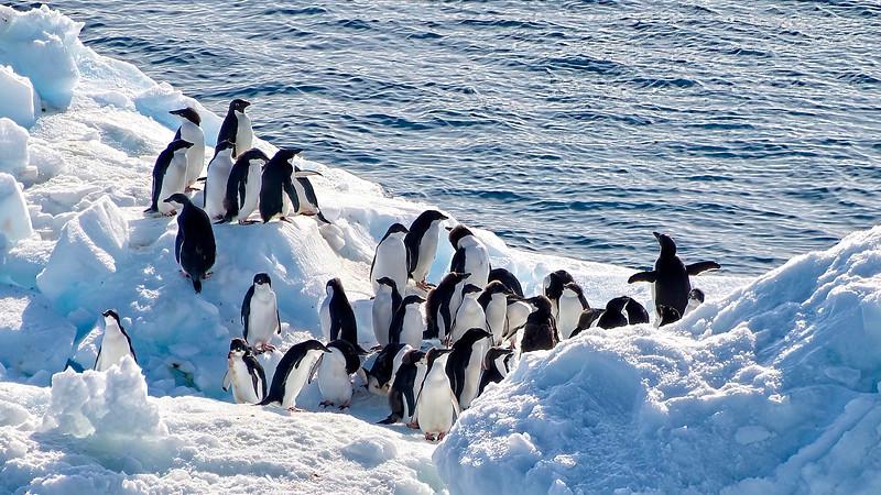Penguin Bus