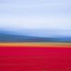 Motion Blur Study: Tulip Field 1