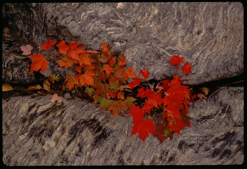 New England Color, 1994