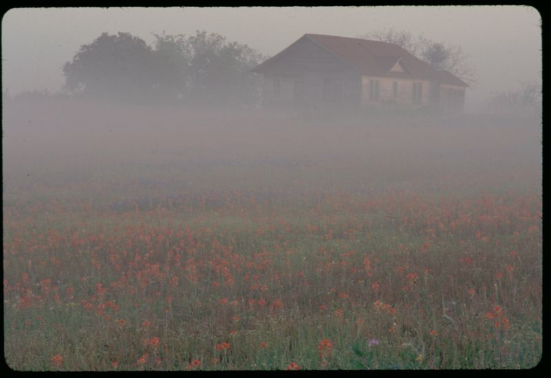 Texas Morning Fog, 2003