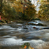 Davidson River, Pisgah National Forest, Transylvania County North Carolina