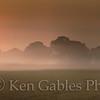 Sunrise through the Fog, Talladega County Alabama