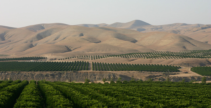 California crops
