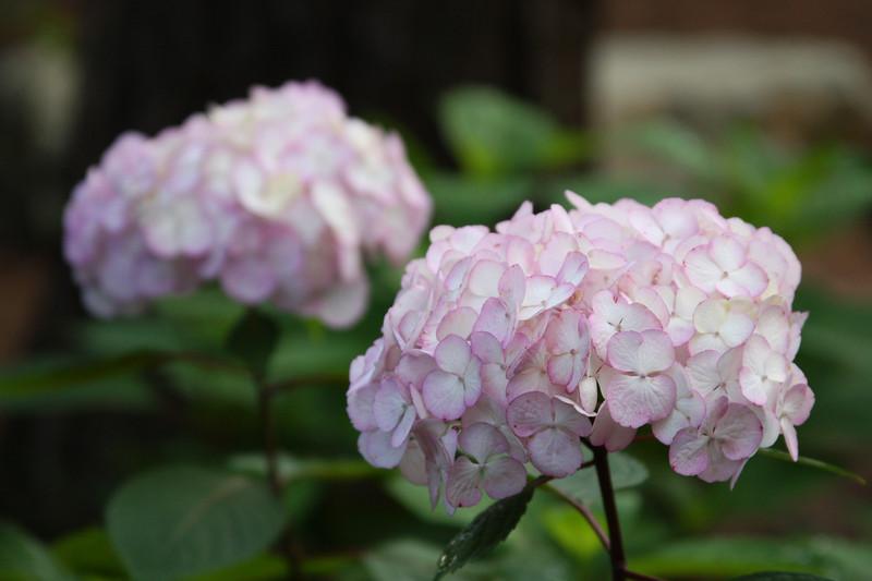 Aldridge Gardens - Hoover, AL