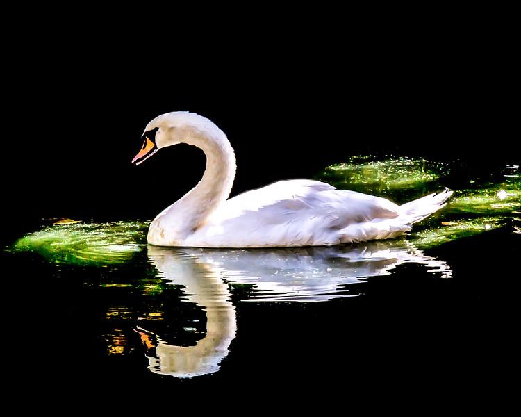 Gliding Beauty