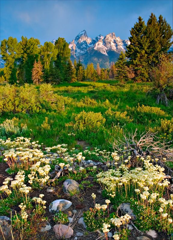 """Mountain Bloom""<br /> Grand Tetons National Park<br /> Jackson Hole, WY"