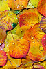 """Aspen Leaves""<br /> San Juan Mountains<br /> Ouray, CO"