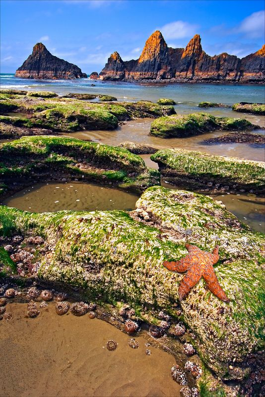 """Seal Rock""<br /> Oregon Coast<br /> Newport, OR"