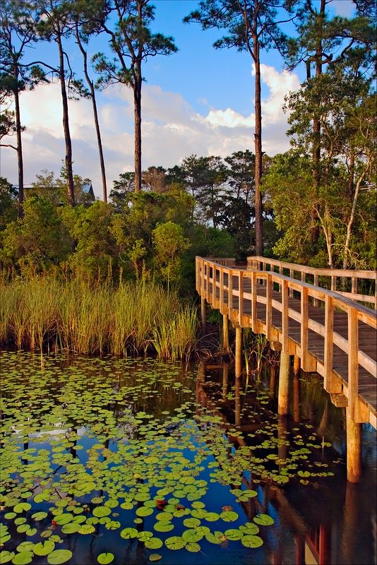 """""""View from the Pier""""<br /> WaterColor Resort<br /> Seagrove, FL"""