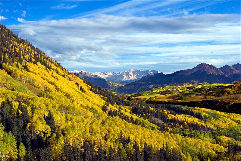 """""""Aspen Yellow""""<br /> San Juan Mountains<br /> Ouray, CO"""