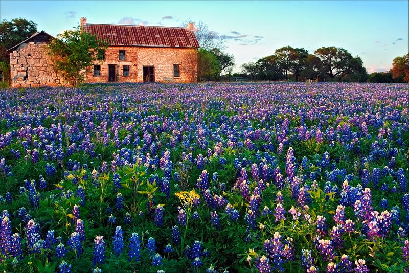 """A Bluebonnet Spring""<br /> Texas Hill Country<br /> Marble Falls, TX"