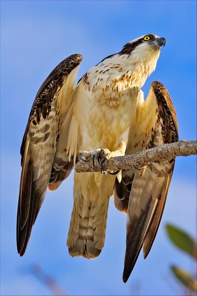 """""""Prepare for Launch""""<br /> Ding Darling National Wildlife Refuge<br /> Sanibel Island, FL"""