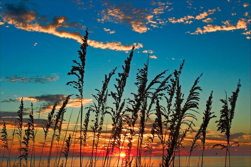 """Sea Oats Silhouette""<br /> Deer Lake State Park<br /> Seagrove Beach, FL"