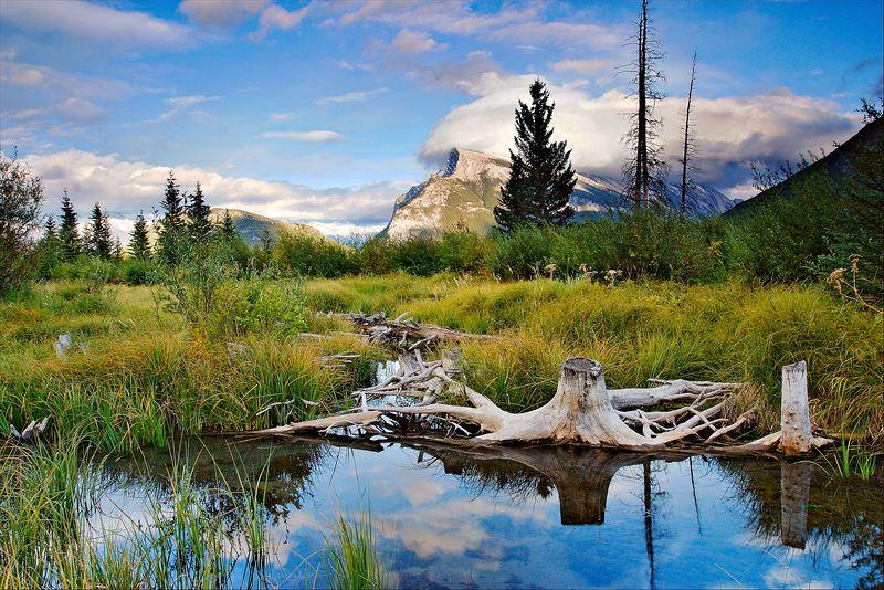 """Marsh Bones""<br /> Banff National Park<br /> Alberta, Canada"