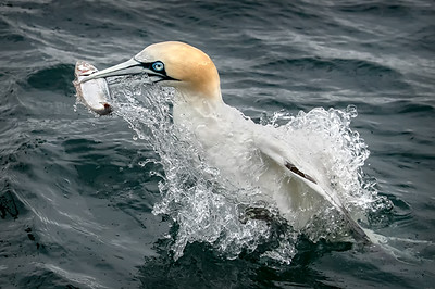 Gannet Resurfacing