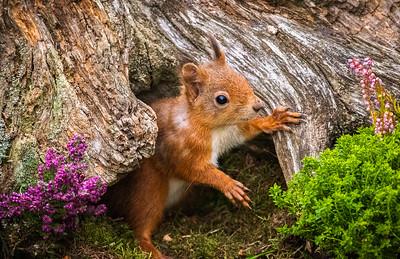 Hello Little Squirrel