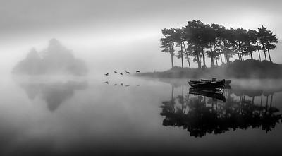 Misty Birds Mono