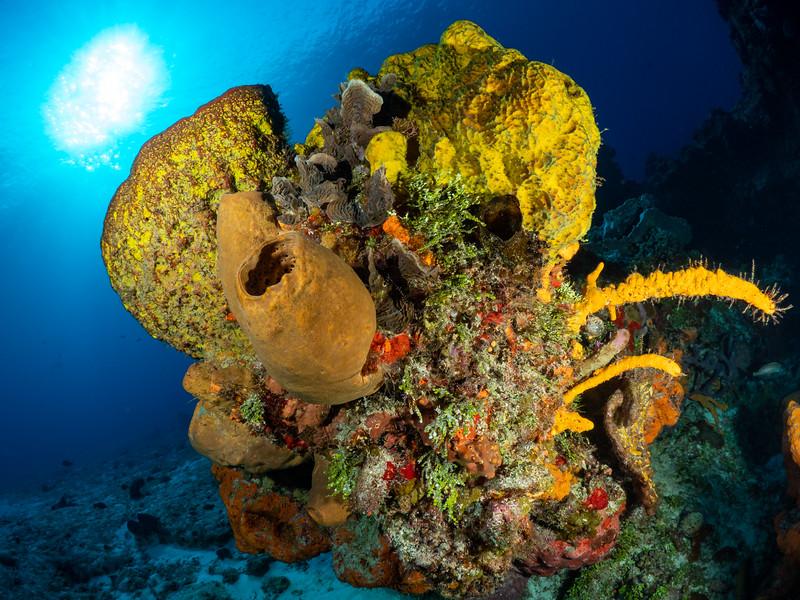 Sponge Sun