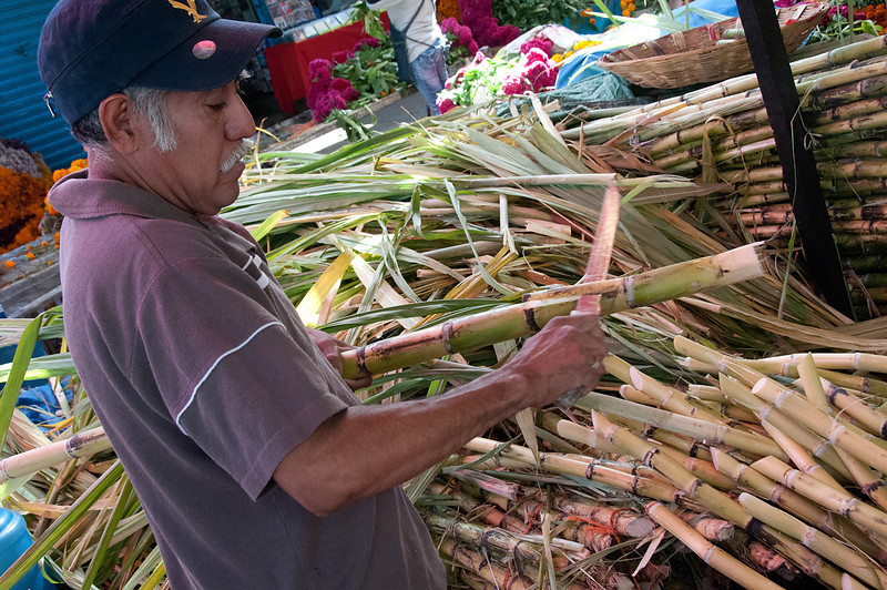 Cutting sugar cane at a market.