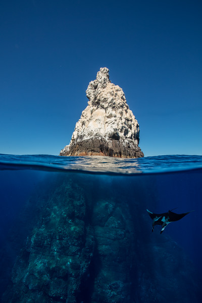 A oceanic manta (Manta birostris) cruises by Roca Partida.g