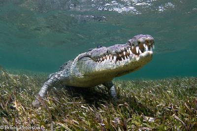 Croc Smile