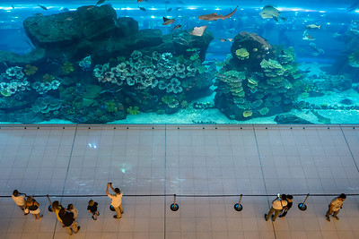 Aquarium inside Dubai Mall, because why not?