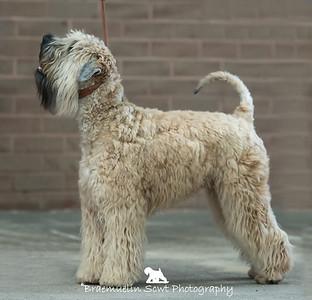 Puppy Dog - 1st