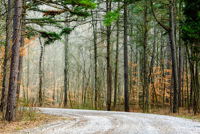 Spring in the Hoosier National Forest
