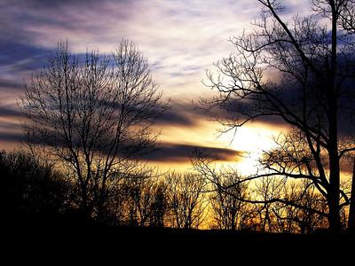 Winter Tree Silhoutte