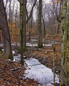 Snowy Trail Muscatutuck National Wildlife Refuge Seymour, Indiana