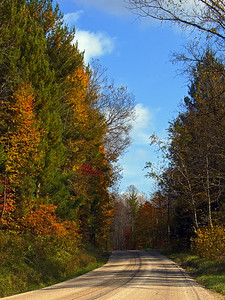 Country Road During Fall