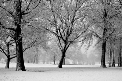 Snowy Morning at the Park