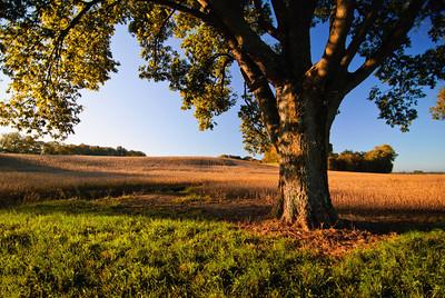 Harvest Time Sunrise