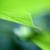 Glowin' Green