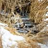 Winter in the Prairie