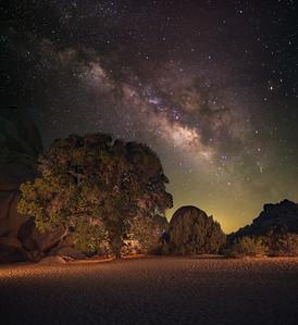 Milky Way over a Coastal Live Oak Tree in Joshua Tree.