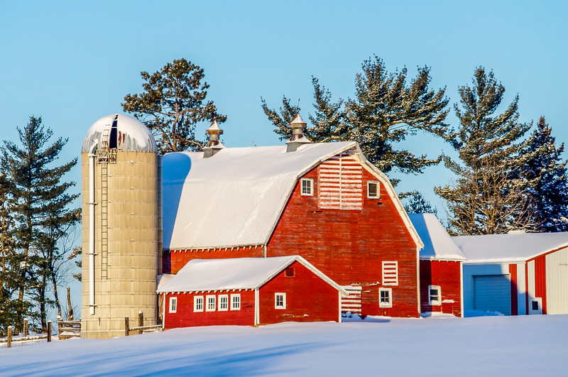 Frosted Pines Over the Old Red Barn