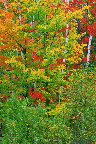 S.2233 - fall colors, Itasca County, MN.