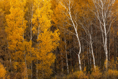 Location: St. Cloud, MN Date: October 18, 2014 Camera Settings: f/2.8 - 1/80 second - ISO 50 @ 170mm