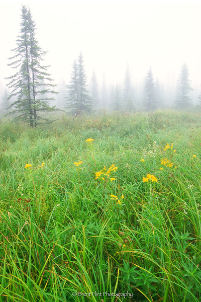S.2533 - boreal forest in fog, Aitkin County, MN.
