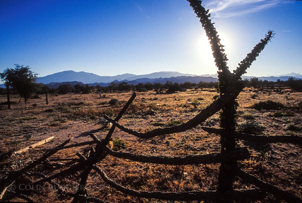 ColinRuggieroPhoto_Cholla_Fence