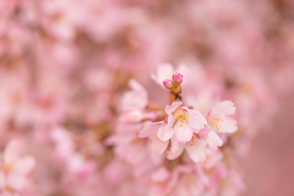 https://themaryphotographer.smugmug.com/Galleries/Misc/Spring/i-pQPqMqg/buy