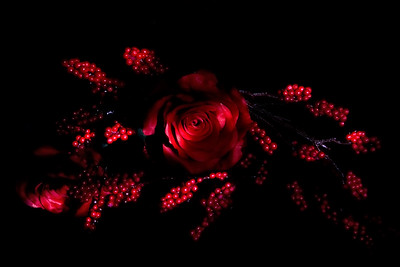 Roses and Berries 2. Light Painting.