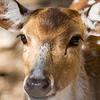 """Hello """"Deer"""""""