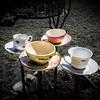 Bird food teacups in the backyard.