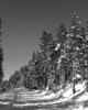 Snow Covered Road, Lookout Point, Yellowstone National Park