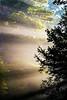 Sun Rays Through the Trees