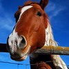 Horse From a Child's Perspective 2