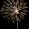 July 6, 2013<br /> <br /> Dandelion Fireworks